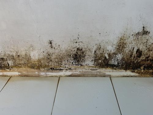 Jak se zbavit plísní a vlhkosti